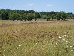 Wild flowers (Frans Schmit) Tags: meadow wildflowers noordhollandsduinreservaat fransschmit astricum