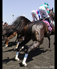 Embrace the Power of Zenyatta (alydar_1978) Tags: horses horse cup race john moss mare jerry angles racing cannon ann graded hip femur tibia thoroughbred stake pelvis hock thich filly conformation breeders mikesmith fibula thepolice gaskin lifeissweet sacroiliac stifle fetlock pastern zenyatta mondatta shireffs rachelalexandra pelvicangle zenyattahorse zenyattaimages zenyattaphotos zenyattaracehorse