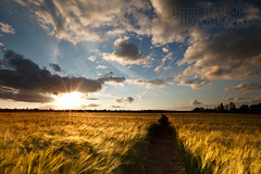 Path through the Corn (Pete Barnes Photography) Tags: sky art field barley clouds rural photography corn path wheat fineart scene crop wakefield agriculture wooly wooley woolley