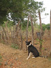 IMG_1546 (Tehhen) Tags: dogs animals dominicanrepublic repúblicadominicana clavellina dajabón