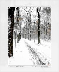 Winter Requiem (Dmitriy Kraynev) Tags: road winter mist snow nature fog forest way landscape miracle magic dream fairy fantasy requiem mystic mystique