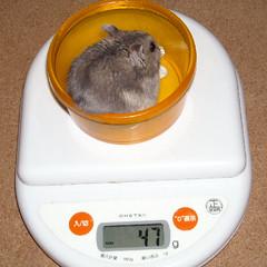 コー太の体重