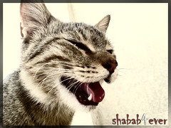 M! Cat (Yousif ALmulla) Tags: cat