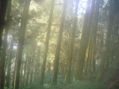 陽光灑在森林裡