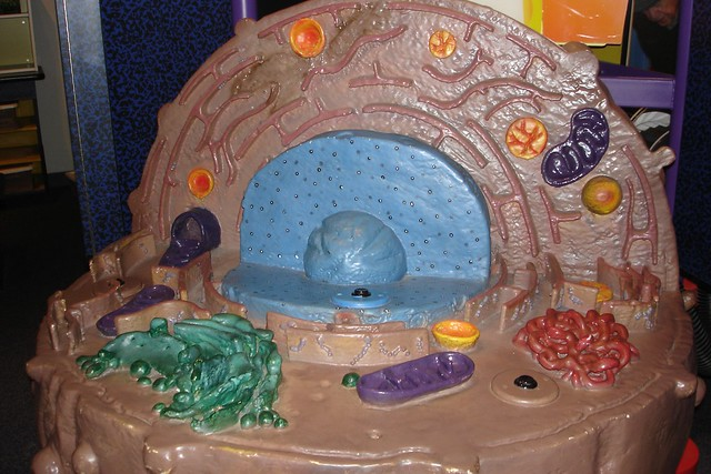 animal cell golgi body. This is a big model of a (eukaryotic) animal cell.