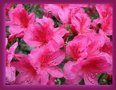 Aprile '08 - A caccia di fiori e colori - 8