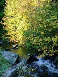 gary-scott-farm-creek