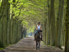 Enjoying the woods on a horseback (Bn) Tags: fab topf25 topf50 topf100 soe horseback horseriding lagevuursche naturesfinest ruiter 100faves 50faves 35faves 25faves beukenlaan anawesomeshot aplusphoto excellentphotographerawards theunforgettablepictures betterthangood goldstaraward 50earthfaves hetutrechtslandschap paardrijdster maartensdijksebos 100earthcomments