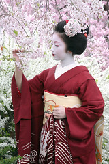 K I M I K A : Sakura (mboogiedown) Tags: travel flowers people woman girl beauty japan cherry asian japanese spring kyoto asia traditional blossoms culture makeup maiko geiko geisha sakura kimono kansai miyagawa miyagawacho kanzashi oshiro kimika hanakanzashi aplusphoto theunforgettablepictures goldstaraward yukizakura goldenheartaward