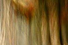 - Aesculus Hippocastanum - (Seung Kye Lee - Fine Art Landscape Photography) Tags: longexposure travel light sky abstract art nature oslo norway forest canon landscape dawn flora scenery energy asia europe mood outdoor dusk earth fineart atmosphere bio korea explore zen seoul environment imagination essence moods incamera interestingness80 abigfave aplusphoto kunstfotografi naturfotograf wwwseungkyeleezenfoliocom landskapsfotograf karljohanvasstrand copyright©seungkyelee