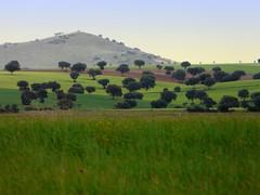 Campos de Toledo - Trigo y encinas mientras la tormenta se prepara. (caminanteK) Tags: voyage panorama color verd