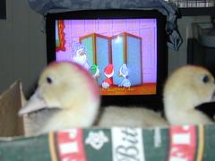 "Watching ""Ducktales"" on TV"