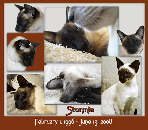 Our Love, Stormie