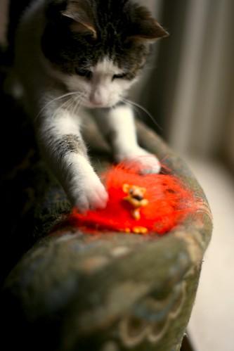 orange pet cat store football soccer attack grocery freebies paraphernalia siepie welpie catsthathatesports