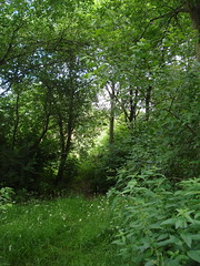 Picture of Ashburton Wood