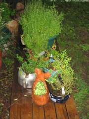 the portable herb garden