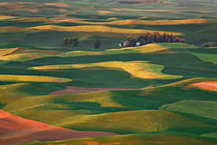 Steptoe Patterns (KPieper) Tags: trees light sunrise landscape washington patterns wheat fields farms canola palouse whitmancounty visiongroup kevinpieper kpieper pieperphotographynet