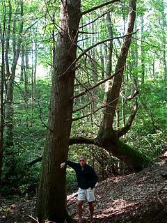 Merrily-farm-woods