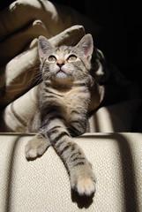 relax (Cristina Zambini) Tags: relax felino gatto animale gattino