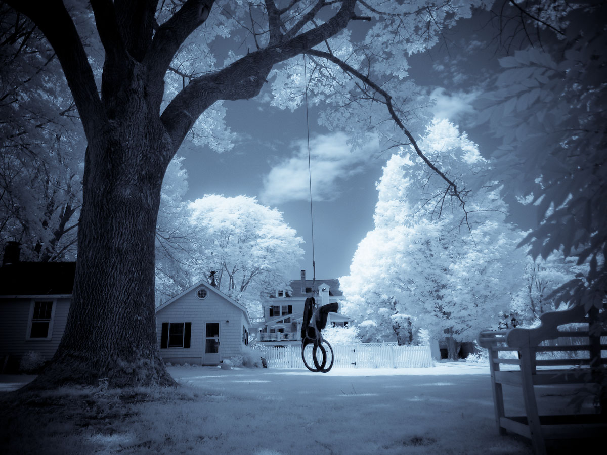 The old tree swing in the backyard