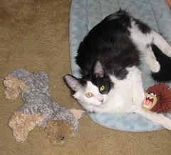 edgar and toys