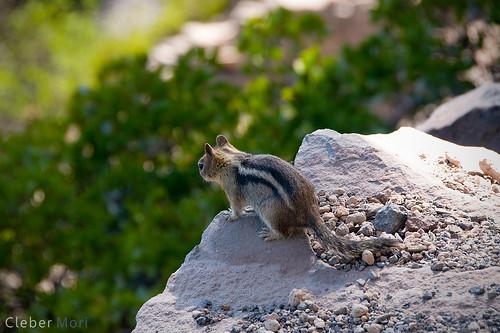 Don't jump pal!