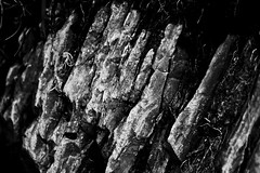 Long Mynd-a28 (kev_zilla) Tags: trees blackandwhite bw church water beautiful closeup canon landscapes woodlands long shropshire slow sheep highcontrast 200 flowing 70200 f4 bnw mynd longmynd stretton f4l bunnywabbit nrshrewsbury textureslongmynd bunnylongmynd