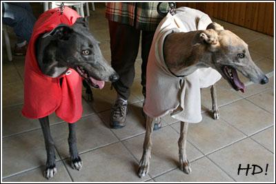 Greyhounds aus Leutersdorf