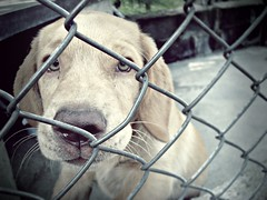 (Jesús Gutiérrez Gómez) Tags: dog pet reja eyes colombia little jesus bigotes can perro ojos cachorro canino gutierrez medellin doggie gomez perrito pequeño encerrado osico sonydscw90 cruzadasgold