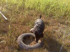 Anna checks out the tire (Clevergrrl) Tags: georgia mud stuck augusta quicksand clarkshill thurmondlake