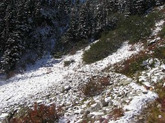 Initial snow along trail