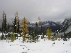 Larch, clouds and a gloomy morning