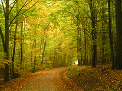 The Way Trough Autumn (_David_Meister_) Tags: autumn orange tree green yellow forest way path herbst gelb grün wald bäume baum pathscaminhos