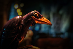 Disney - 13 Nights of Halloween - The Grinning Raven (Express Monorail) Tags: california travel walter vacation usa america dark movie wonder geotagged fun psp losangeles scary lowlight nikon ride availablelight disneyland f14 magic details dream sigma wed elias freaky disney mickey spooky fantasy mickeymouse grinning imagine theme smirk wish orangecounty anaheim walt raven magical dl dlr themepark magickingdom attractions fantasyland d300 snowwhiteandthesevendwarfs wdi 30mm disneylandresort darkride imagineering disneymovie snowwhitesscaryadventures disneypictures disneyparks disneypics expressmonorail disneyride disneyphotos paintshopprophotox2 classicfantasylanddarkride disneyphotochallengewinner joepenniston disneyphotography disneyimages geo:lon=11791928 geo:lat=3381325 fantasylandattractions