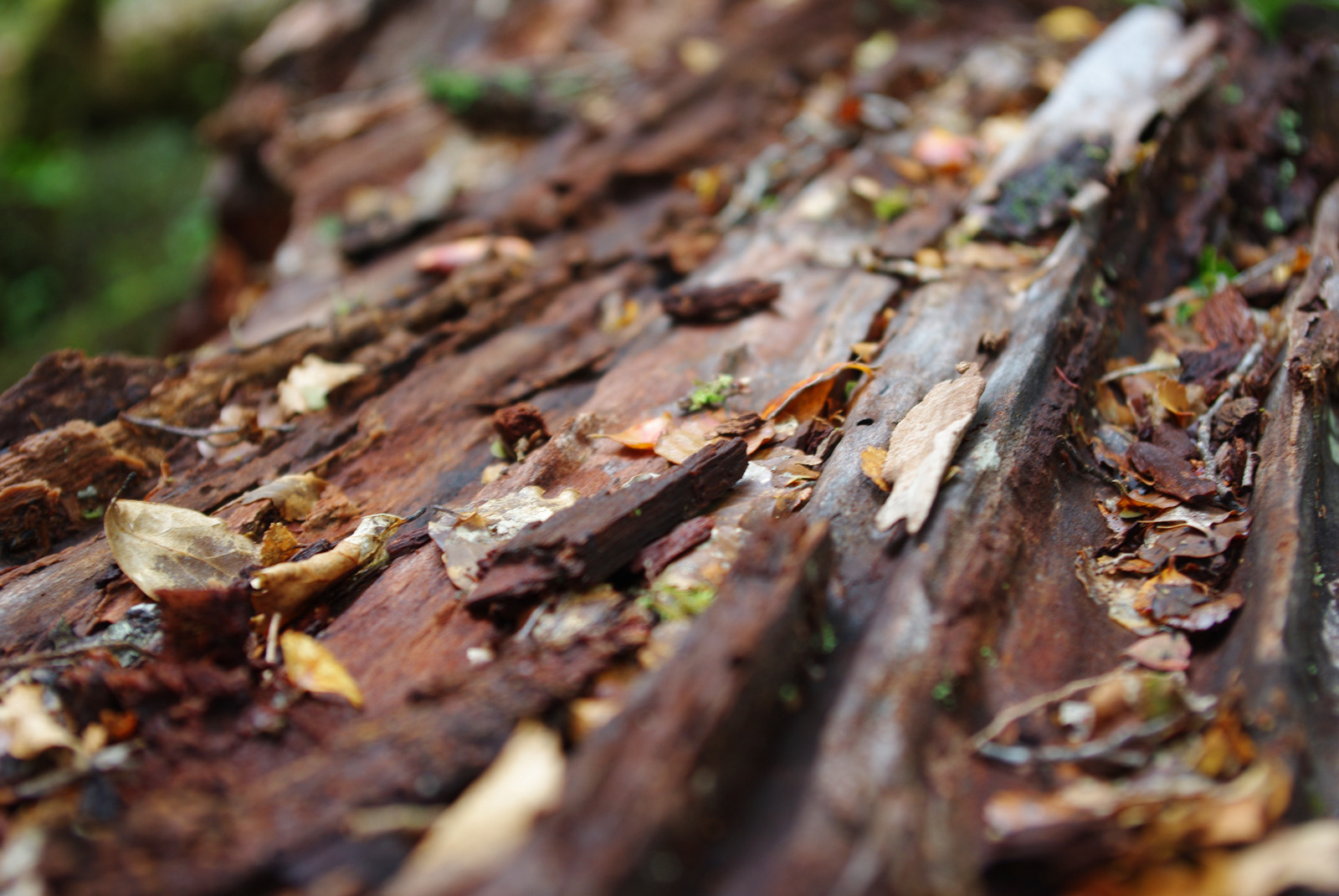 Rotten bark details