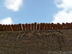 P1010538 (Mina kedis) Tags: macro toothpicks apreture fz18