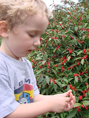 Sam picking Berries