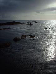 Swimming in the ocean (hugovk) Tags: ocean camera autumn dog france beach digital swimming geotagged sand october brittany bretagne atlantic breizh hvk 2008 plage morbihan atlanticocean syksy laplage llydaw locmariaquer swimmingintheocean golfedumorbihan lokakuu ranska yannig hugovk geo:country=france exif:ISO_Speed=50 gulfofmorbihan oceanjpg lokmariakaer 174kmtolocmariaquerinbrittanyfrance imag5605 geo:lat=47555497 geo:lon=2966238 exif:Focal_Length=77mm digitalcamerads5mp exif:Flash=autodidnotfire geo:region=brittany exif:Aperture=30 exif:Exposure_Bias=0 geo:county=morbihan ds5mp camera:Model=ds5mp camera:Make=digitalcamera exif:Exposure=11020 geo:locality=locmariaquer meta:exif=1364128239