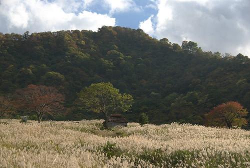 20081101021ススキ原