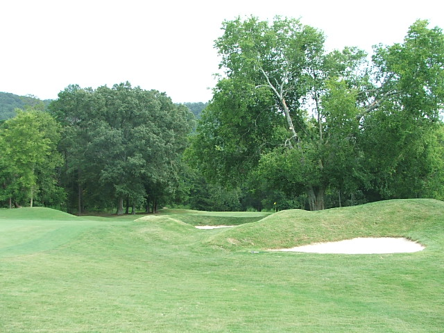 #12 greenside tree