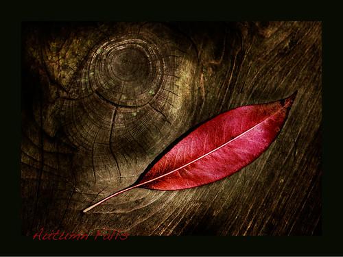 autumnfalls