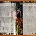 CD-Cover Celarda -Booklet Doppeltextseite