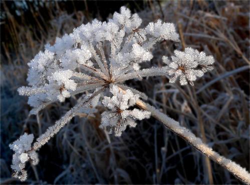 Frost 01Dec08