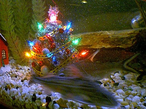 Archive Christmas Fish 2002