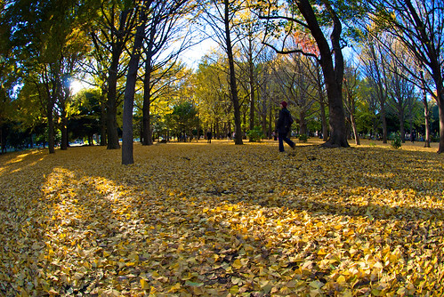 Autumn in Yoyogi 04