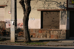 Szlvy utca (sonofsteppe) Tags: street old winter shadow urban detail building tree art horizontal stone wall facade corner concrete 50mm daylight store closed hungary exterior outdoor budapest pillar nobody scene explore shutter series visual exploration thewall fragment bough ilmuro streetplate scribbled wallscape sonofsteppe pusztafia kbnya utcatbla streetplatesofbudapest szlvyutca urbanlifeoftrees