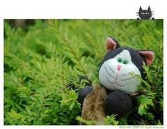 Crispy- (Kar Wei) Tags: grass cat leaf crispy
