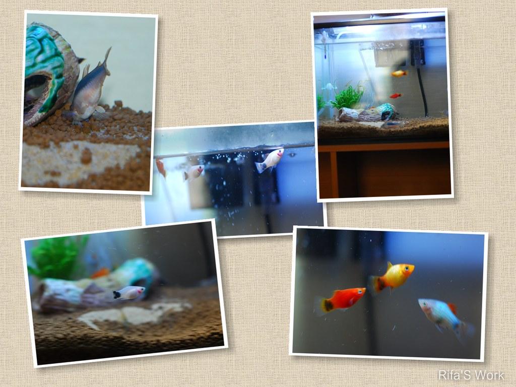 aquarium syami 5