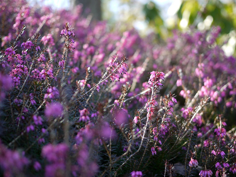 purpleheath