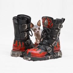 [フリー画像] 動物, 哺乳類, 猫・ネコ, 物・モノ, ファッション用品, スフィンクス (ネコ), 靴・シューズ, 201106101100